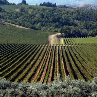 Ecotour fra oliveti e vigneti